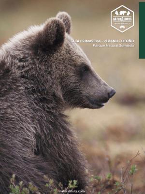 osos-en-somiedo